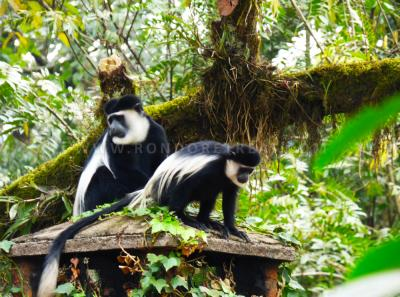 Atop The Colobus Cottage